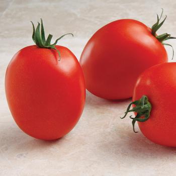 Namib Hybrid Tomato