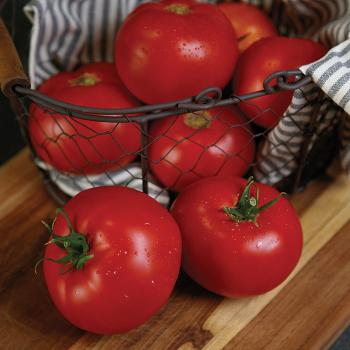 RuBee Prize Hybrid Tomato
