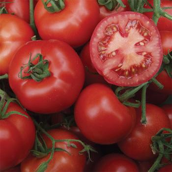 Serrat Hybrid Tomato