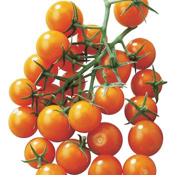Sunsugar Hybrid Tomato - Pixie Stakes