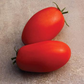 Supremo Hyb Tomato