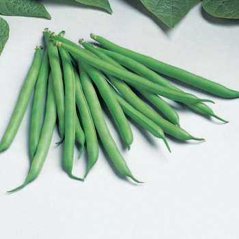 Bountiful Bush Bean