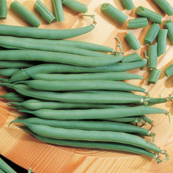 Top Crop Bush Bean
