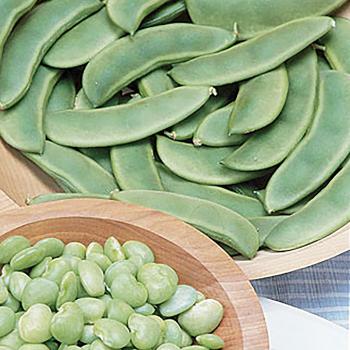 Fordhook Lima Bean
