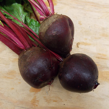 Early Wonder Or Model Beet