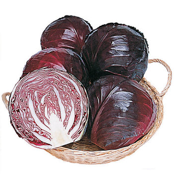 Ruby Perfection Hybrid Cabbage