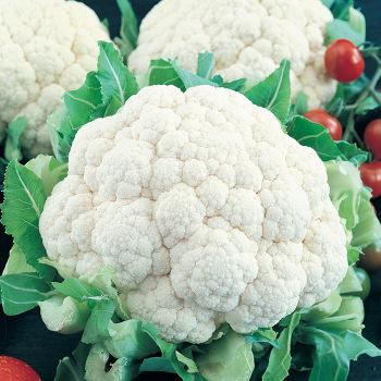Snowball Self-Blanching Cauliflower
