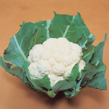 White Corona Hybrid Cauliflower