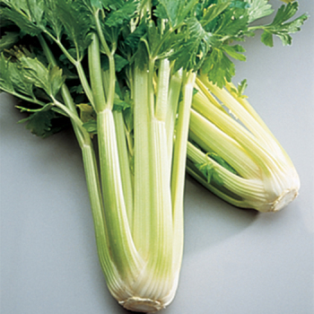 Golden Self-Blanching Celery