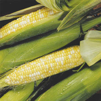 Pay Dirt Bicolor Hybrid Sweet Corn