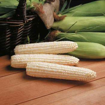 Avalon Triplesweet White Sweet Corn