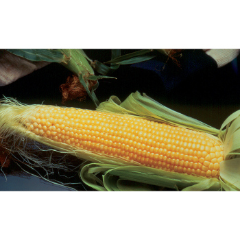 Incredible Rm Yellow Sweet Corn