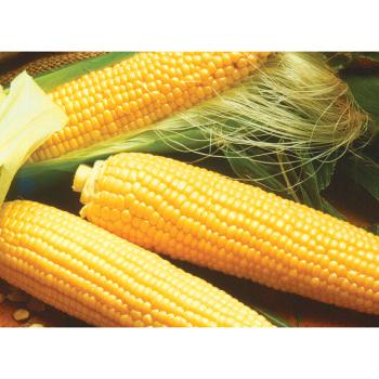 Miracle Yellow Se+ Sweet Corn