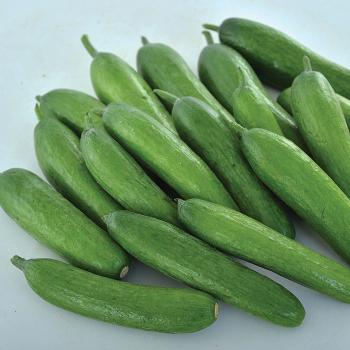 Green Light Hybrid Cucumber