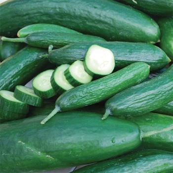 Muncher Cucumber
