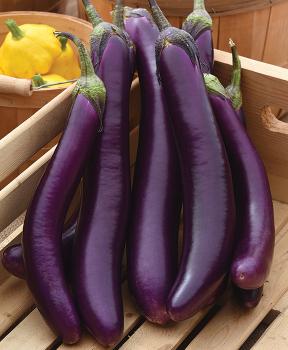 Asian Delite Hybrid Eggplant