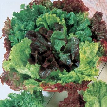 Bon Vivant Mesclun Blend Lettuce