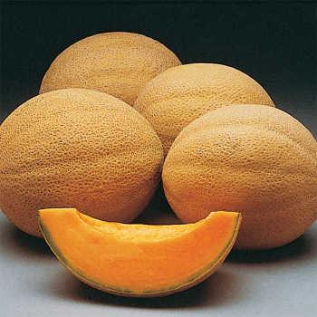 Athena Hybrid Melon