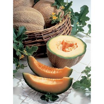 Burpee Hybrid Pmt Melon