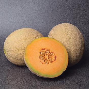 Accolade Hybrid Cantaloupe