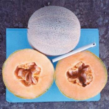 Hale's Best Jumbo Melon