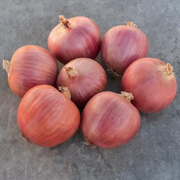 Blush Hybrid Onion