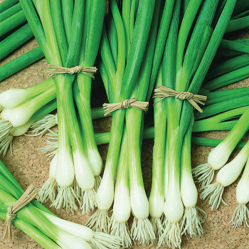 Warrior Bunching Onions