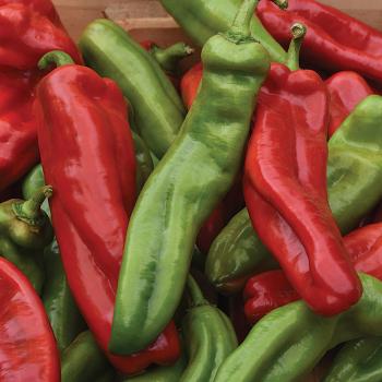 Cornissimo Peppi Pepper Hybrid