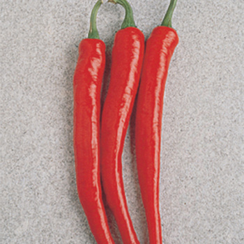 Cayenne Long Red Thin Pepper - Pixie Stakes