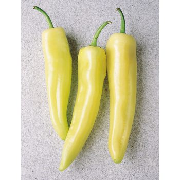 Inferno Hot Banana Hybrid Pepper