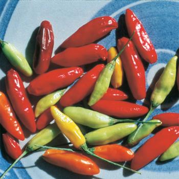 Tabasco Pepper