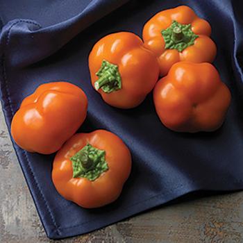 Hungarian Cheese Orange You Sweet Hybrid Pepper