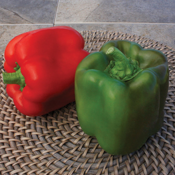 Touchdown Hybrid Pepper