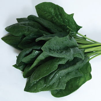 Imperial Valley Hybrid Spinach