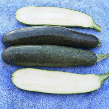 Black Zucchini Squash