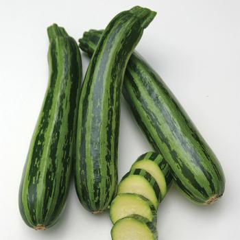 Green Tiger Hybrid Zucchini