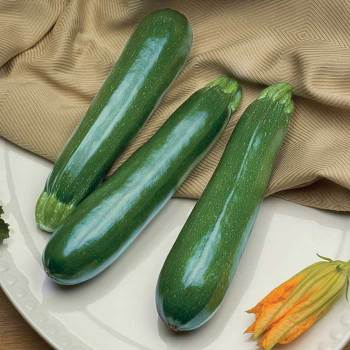 Spineless Perfection Hybrid Zucchini