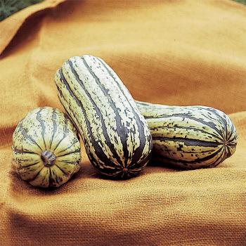 Sweet Potato Or Delicata Winter Squash