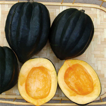 Table Queen Ebony Winter Squash