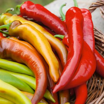 Mexican Sunset Hybrid Pepper