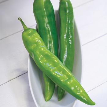 Desperado Hybrid Pepper