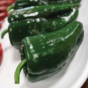 Carranza Hybrid Pepper