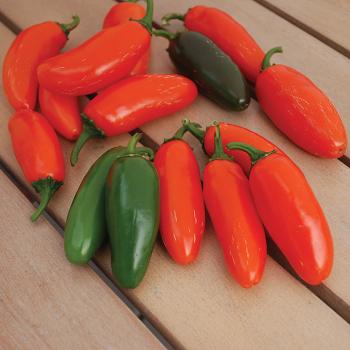 Orange Spice Jalanpeno Pepper