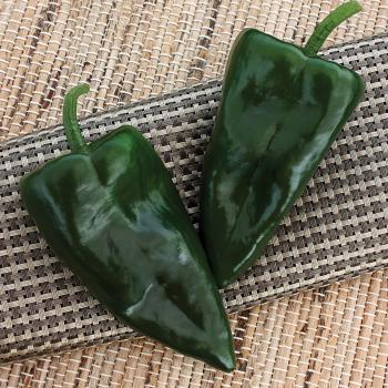 Trident Hybrid Pepper