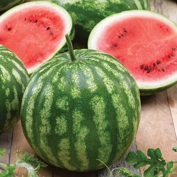 Cal Sweet Bush Watermelon