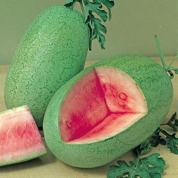 Charleston Gray 133 Watermelon