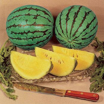 Yellow Doll Hybrid Watermelon