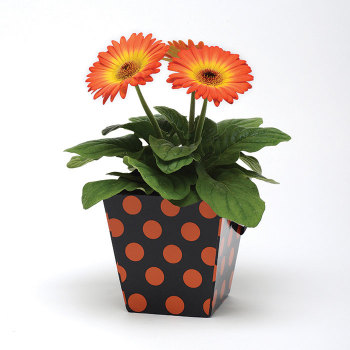 Revolution Yellow Orange Gerbera