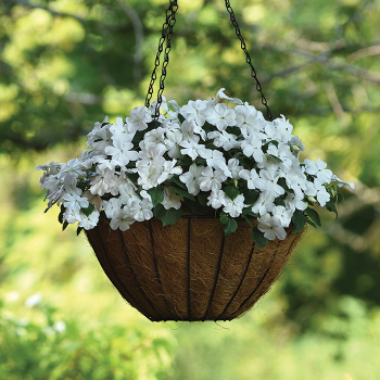 White Beacon Hybrid Impatiens - 250 seeds