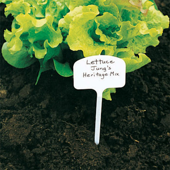 T Label 8 Inch Plant Marker